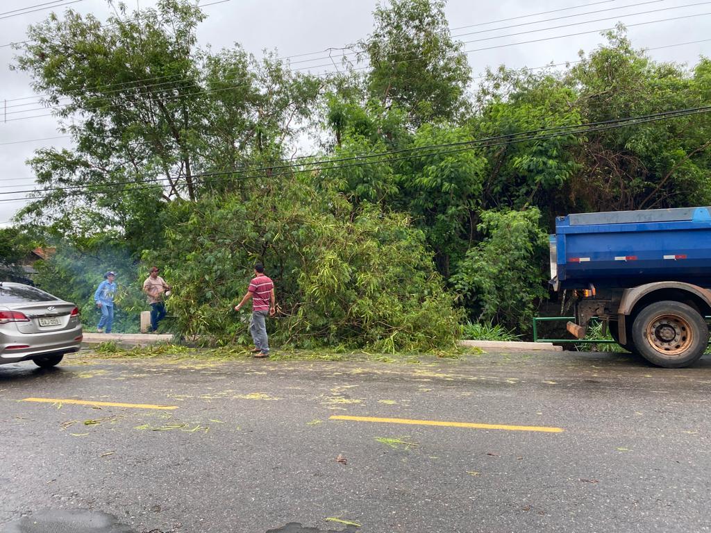 Chuva forte derruba árvores em Bonito durante a madrugada